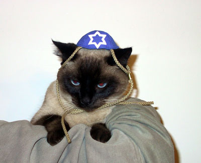 Gotta love the yarmulke-donning cat!