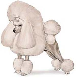 trust me, my poodle perms looked way worse than this