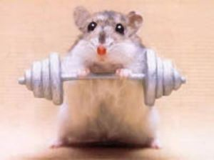 sadly, this rat looks cuter than I do at the gym