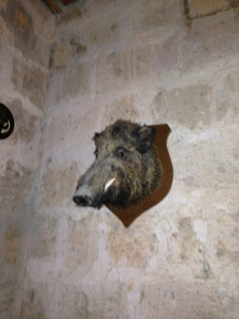 what every castle needs--an ancient boar mounted on the wall