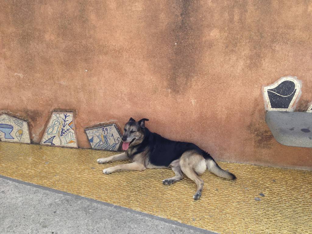 Arturo, the bus-hopping dog